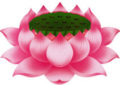 The Lotus in Buddhism
