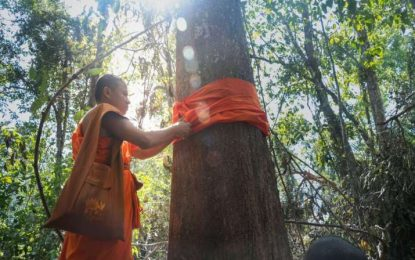 Buddhist Eco-monks and Tree Ordination